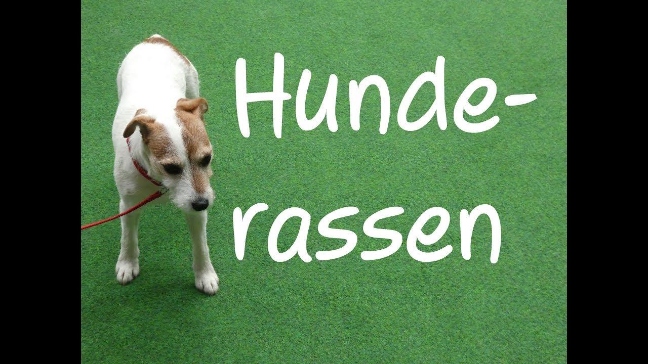 Learn German: Hunderassen