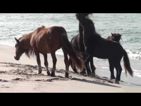 Wild Horse Spirit - A Journey to Sable Island