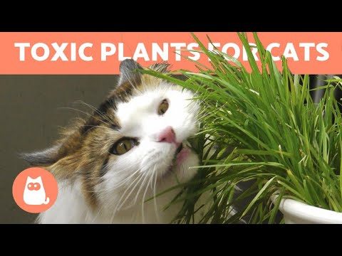 10 TOXIC PLANTS For CATS 🐱 ❌ 🌷 In The Home & Garden