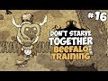 Beefalo Training Don 39 T Starve Together Gameplay Part 16 mp3