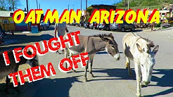 Attacked by Wild Burros in Oatman Arizona