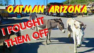 Attacked by Wild Burros in Oatman Arizona
