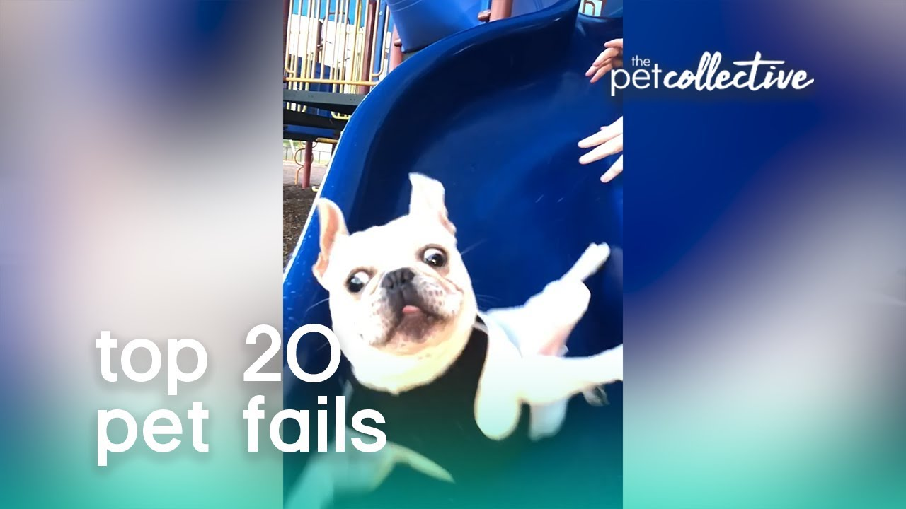 Best Pets of the Year: Top 20 Pet Fails | The Pet Collective