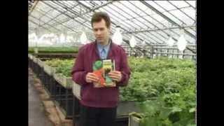 Овощеводство по Миттлайдеру 17 - Болезни растений(Неполноценное питание является причиной многих заболеваний. Растения