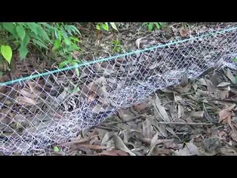Cách giăng lưới bẫy rắn ( Snake trap by fishing)