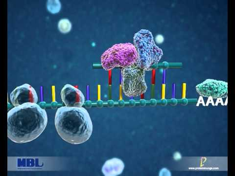 MBL International Corporation- RIP-Chip Assay for microRNA