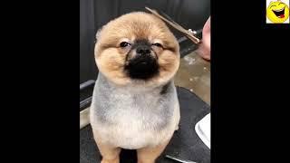 video hài động vật 03: Động vật siêu dễ thương, hài hước, đáng yêu