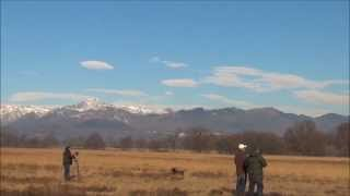 boomerang BOOMBASTIK vs DRONE
