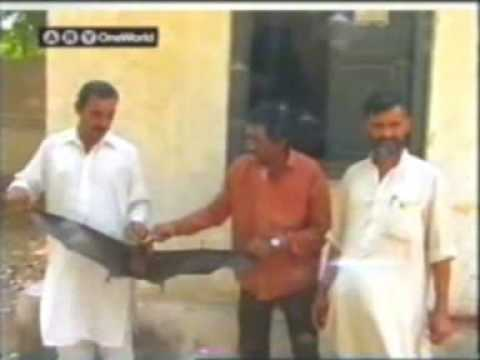 Hyderabad Sindh: 6 feet  long Bat died in an accident