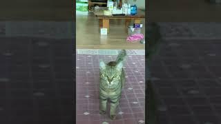세상에서 제일 말많은 고양이 ㅋㅋㅋ #shorts
