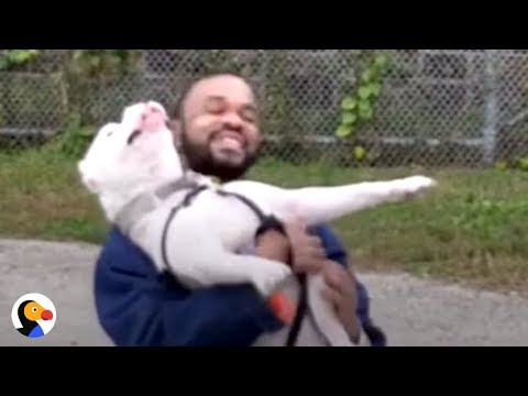 Pit Bull and Prisoner CHANGE Each Other's Lives | The Dodo