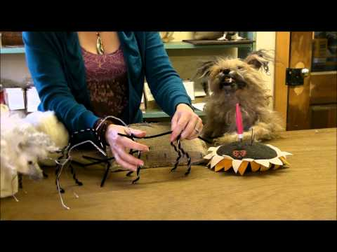Outtakes:  Milo Barks Uncontrollably by Sarafina Fiber Art