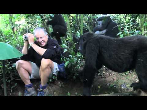 Extraordinary Encounter with Mountain Gorillas in Bwindi, Uganda
