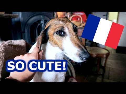 TOO MUCH FRENCH CUTENESS IN AUVERGNE! - TRAVEL VLOG 332 AUVERGNE | ENTERPRISEME TV