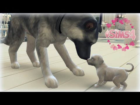 🐶🐱The Sims 4 Jak pies z kotem #13 - Kuleczki szczęścia 💕