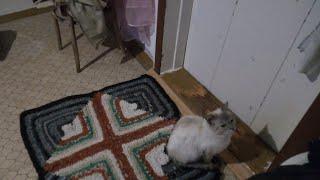 Как вывести запах кошачей мочи, Как отучить котенка гадить где попало