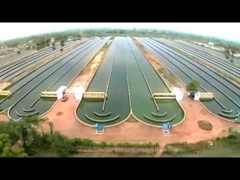 Spirulina Algae Production line in industrial scale- ALGOTAB- GreenBigFood  - تولید جلبک اسپیرولینا