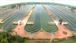 Spirulina Algae Production line in industrial scale- ALGOTAB- GreenBigFood  - تولید جلبک اسپیرولینا