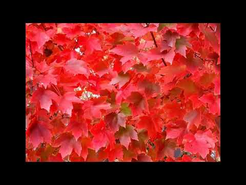 Video guide to the colors of fall foliage in Pennsylvania