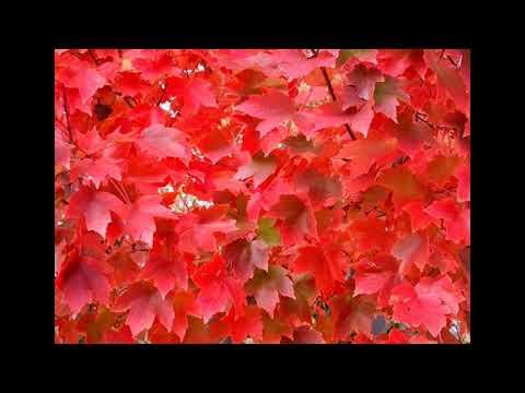 Fantastic Fall Foliage Festivals Across Pennsylvania Pennlive Com