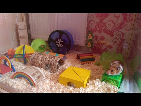 HOW I CLEAN MY HAMSTER CAGE 🐹 | Malica Hamilton