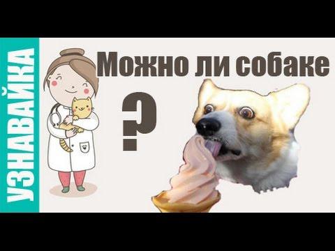 Можно ли собаке кости, арбуз, молоко. Узнавайка