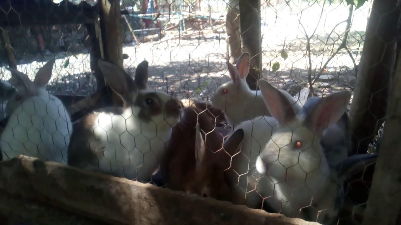 Conejos de 5 meses