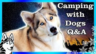 CAMPING WITH DOGS TIPS Fan Friday thumbnail