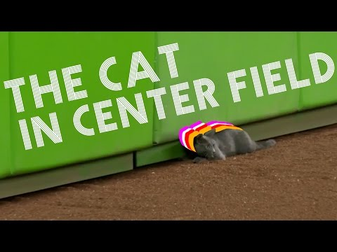 The Cat In Center Field - Songify This!