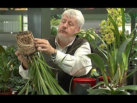 Comment Soigner Une Orchidée : orchidees comment bien les rempoter youtube ~ Farleysfitness.com Idées de Décoration