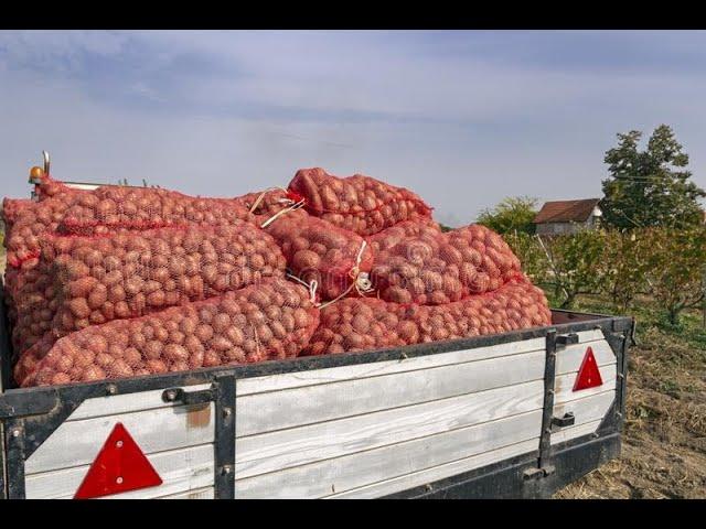Bag of Potatoes story