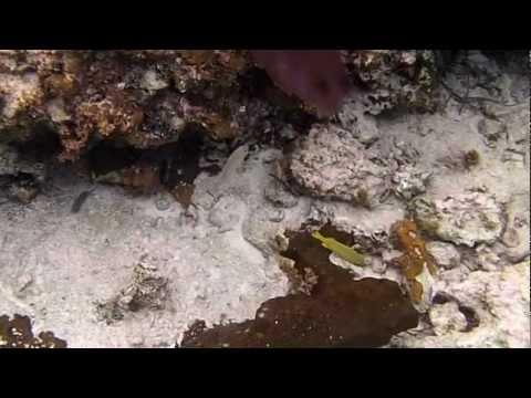 snorkle adventure Jamaica 2012.MP4