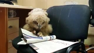 Совёнок Ёлка учится читать. Внимание! Сезон СОВпадений начался, не забирайте совят домой!