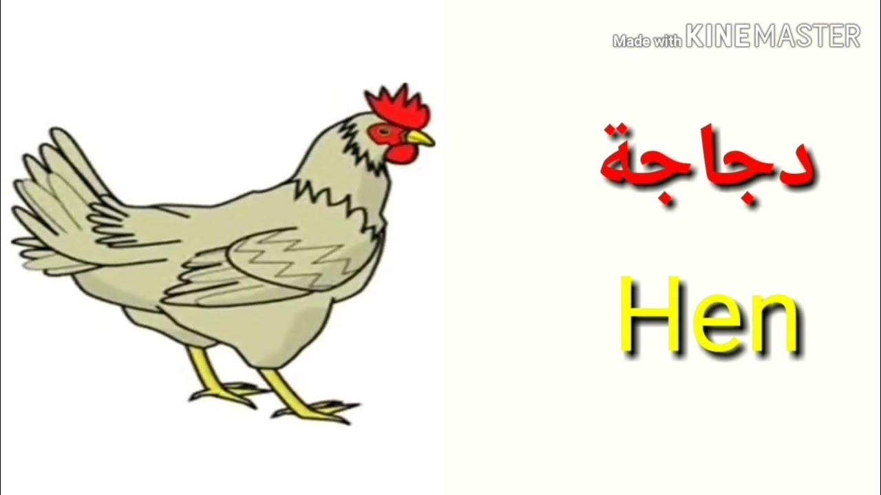 Names Of Animals In English And Arabic اسماء الحيوانات بالانجليزي و العربية Youtube