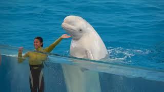 Yokohama Hakkeijima Sea Paradise Attraction Animal Show  【4K】