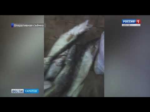 В Новоузенском районе задержали браконьеров