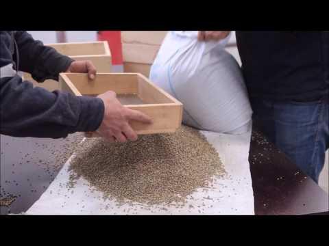 Hemp Seed Cleaning & Hulling in Akyurek Factory