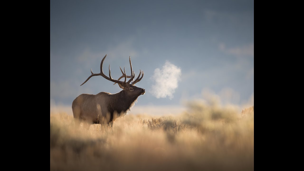 Canon R5 - A wildlife photography review