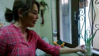 Como cultivar cebolinha em casa no copo