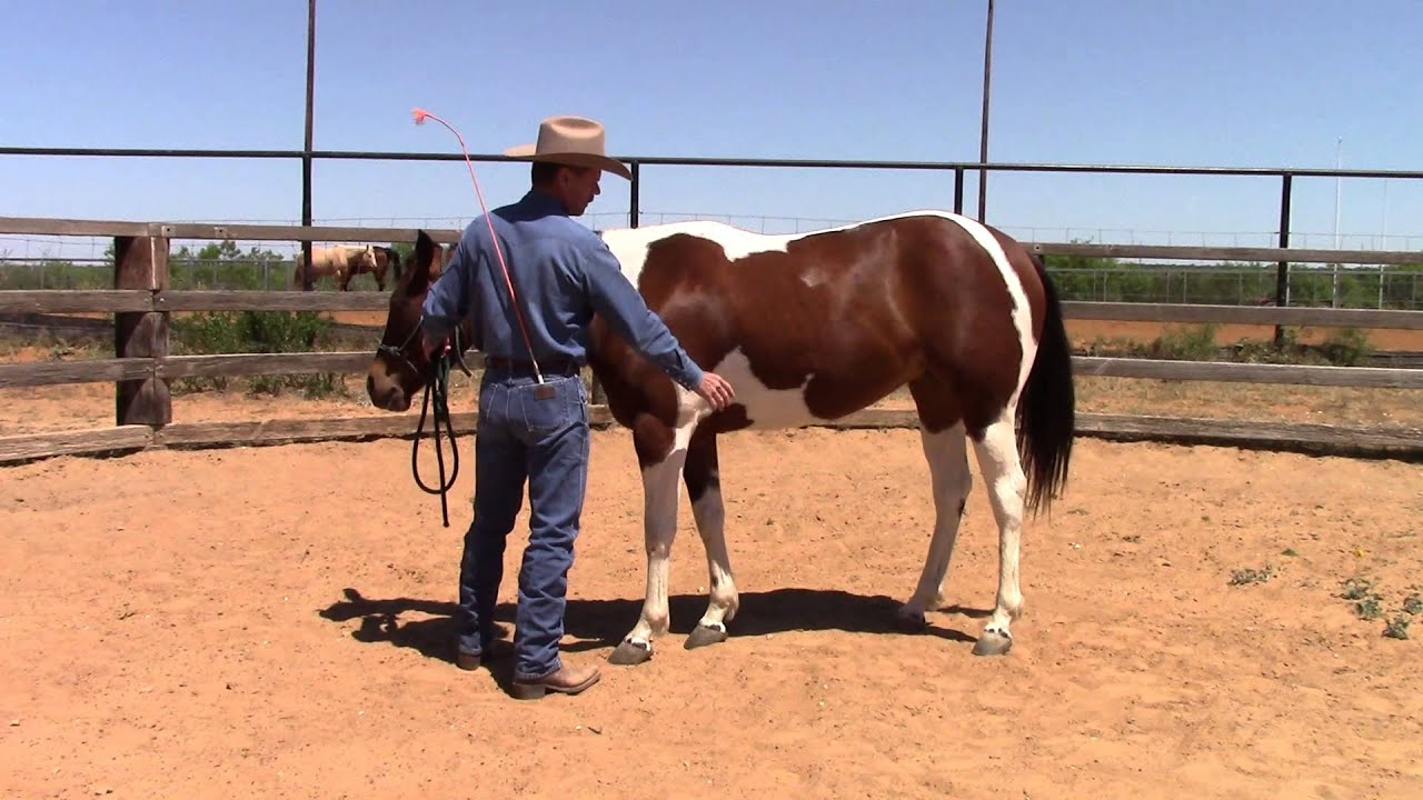 how to turn a horse with leg pressure