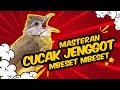 Wow Cucak Jenggot Gacor Mewah Mbeset Ngepik Cocok Buat Masteran Burung Lomba  Mp3 - Mp4 Download