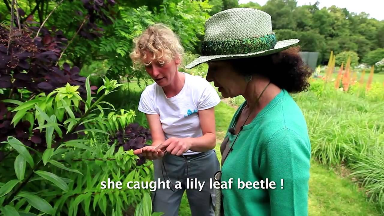 Visiter les plus beaux jardins en touraine visit the for Visiter les plus beaux jardins anglais