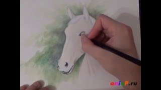 Рисуем портрет лошади