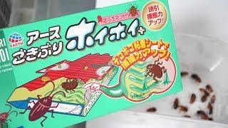 大量のゴキブリにゴキブリホイホイをあげた結果…衝撃の事実が発覚! thumbnail