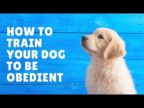 easy-and-proven-dog-training-techniques-to-train-your-dog-to-be-obedient