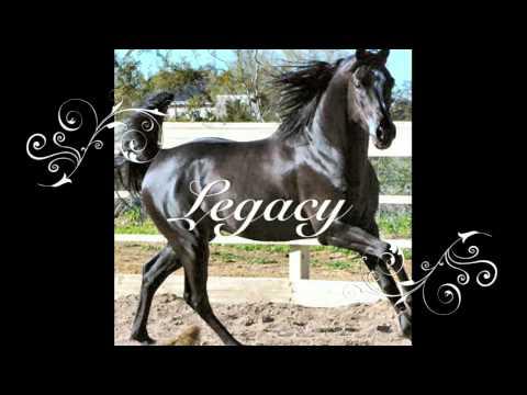 Beautiful Horse Names