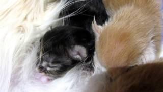 Kittens grow.(2days-2weeks)Котята растут.