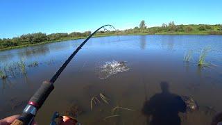 В ЭТОМ БОЛОТЕ ПОЛНО РЫБЫ ЩУКА НА КАЖДЫЙ ЗАБРОС Люблю такую рыбалку