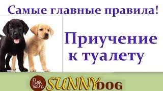 Приучить  щенка ходить к туалет на улицу? Как приучить писять и какать на улице. главные правила!