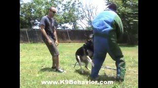 German Shepherd Protection Dog Training Los Angeles